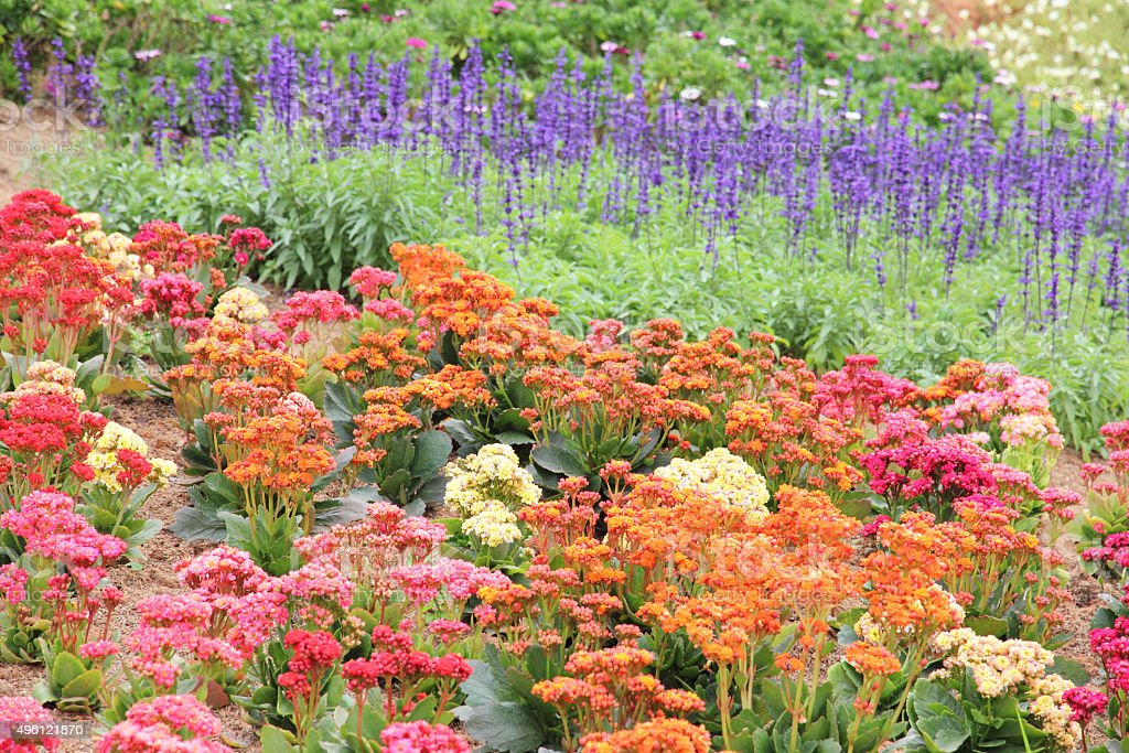 Multicolored flower bed in garden. stock photo