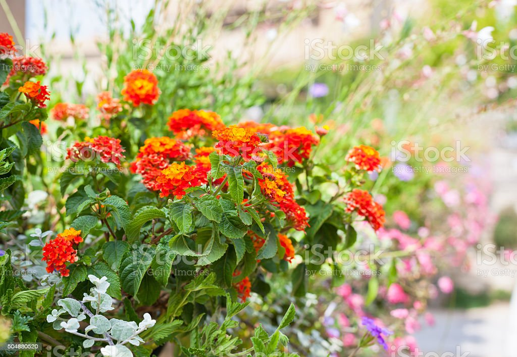 Multicolored flowerbed on a street stock photo