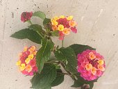 Multicolored Flowers On Stone Background