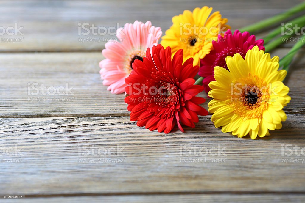 multicolored gerbera on wooden background stock photo