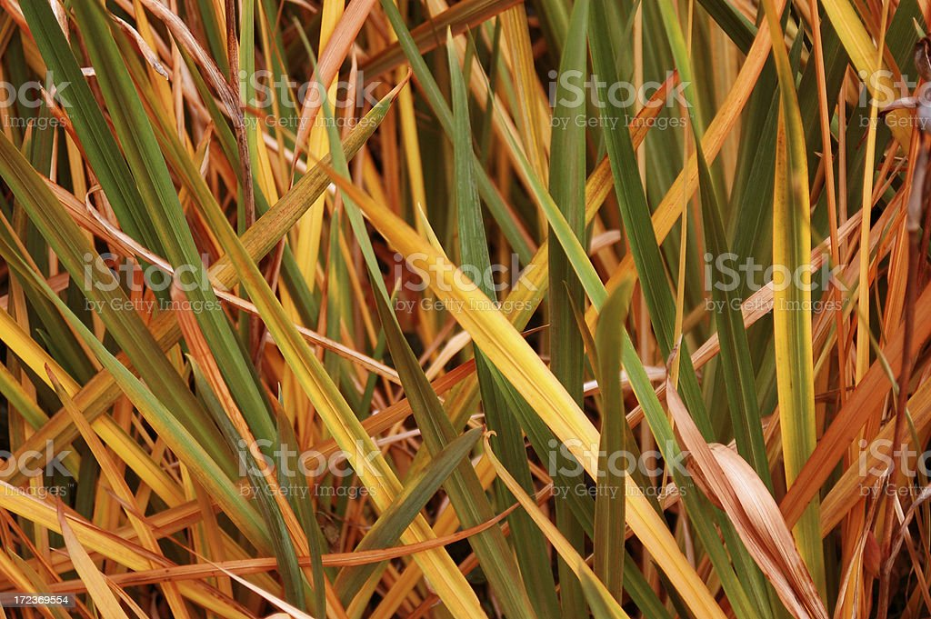 Multicolored grass close-up royalty-free stock photo