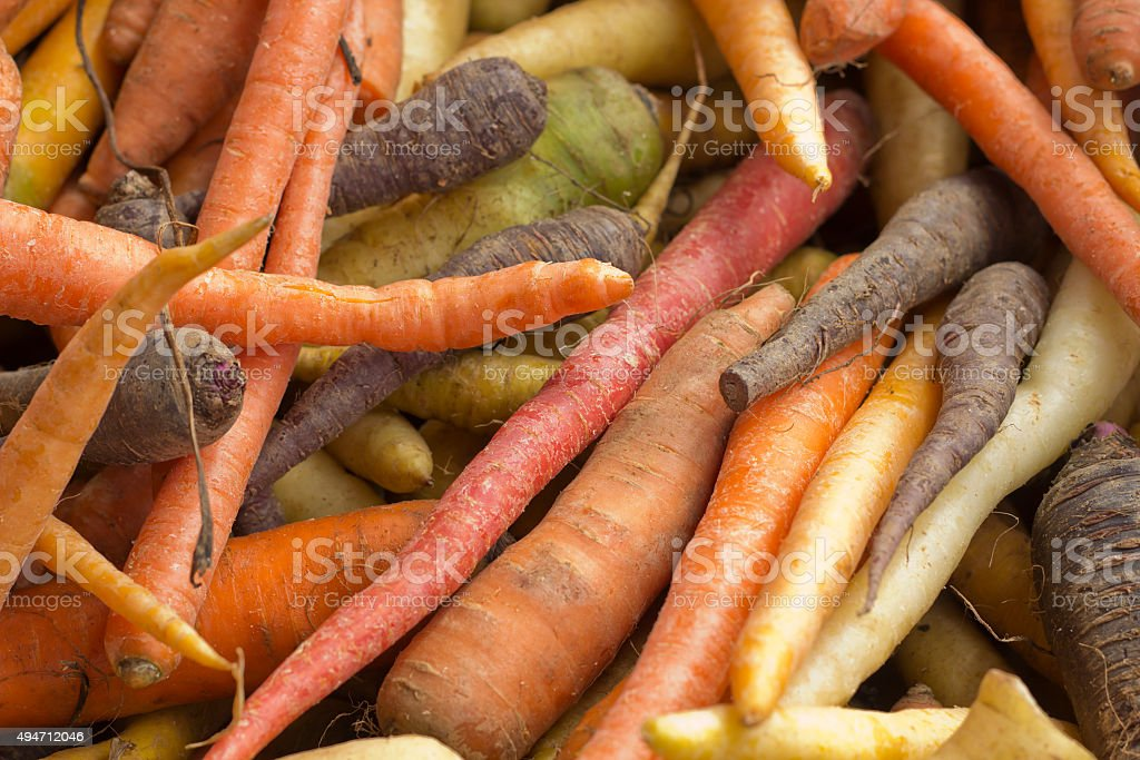 Multicolored Heirloom Carrots stock photo