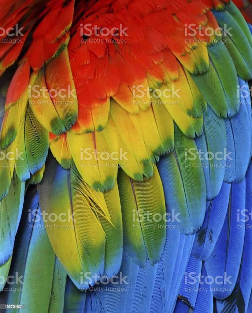 Multi-Colored Macaw Feathers stock photo