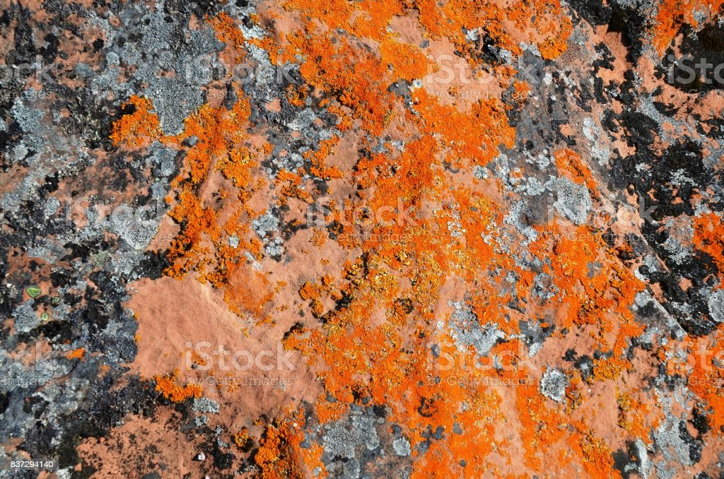 Multicolored mosses, fungi and lichens, growing on huge stone slabs stock photo