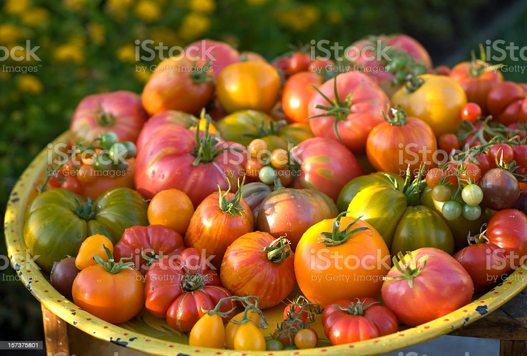 Multicolored organic heirloom tomatoes stock photo