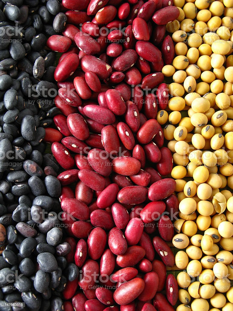 multicolor royalty-free stock photo