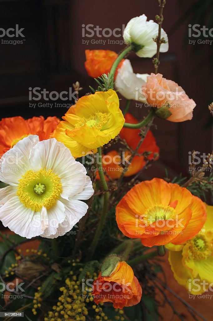 Multicolored Poppies royalty-free stock photo
