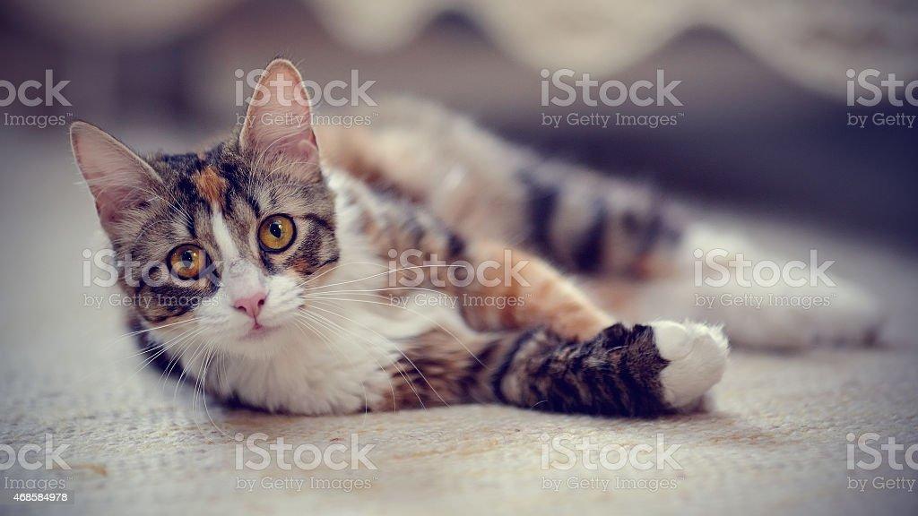 Multi-colored striped cat. stock photo