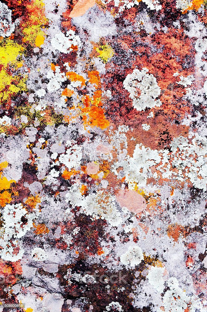 Multicolored textured abstract fungus background stock photo