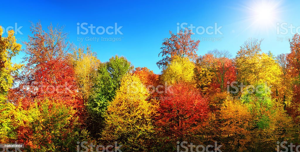 Multi-colored trees in autumn's best weather stock photo