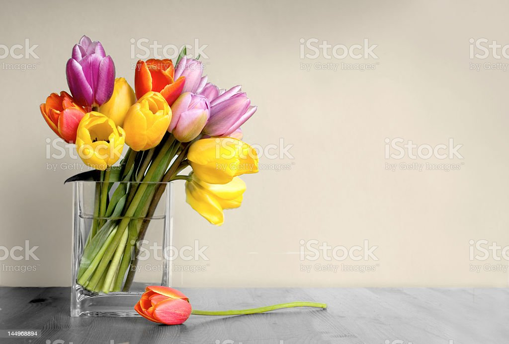 Multicolored tulips in clear square base on gray tabletop stock photo