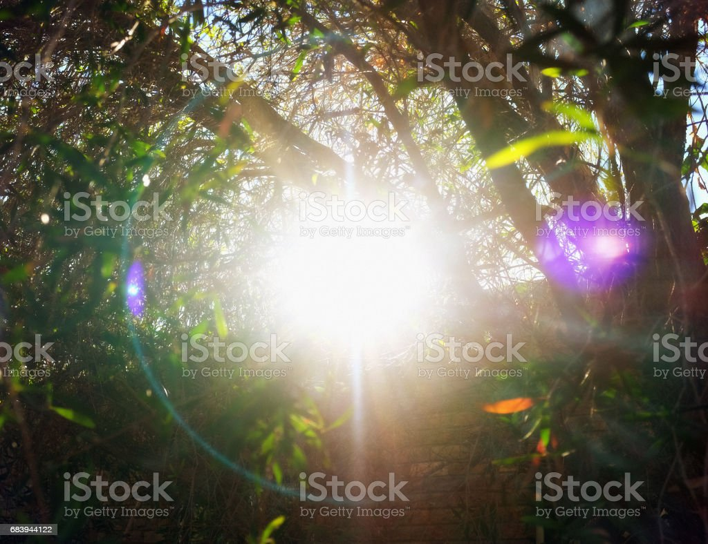 Multicoloured sundog light effect seen through silhouetted tree branches stock photo
