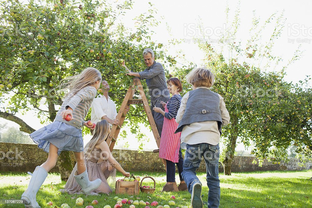 Multi-generation family harvesting apples in orchard stock photo
