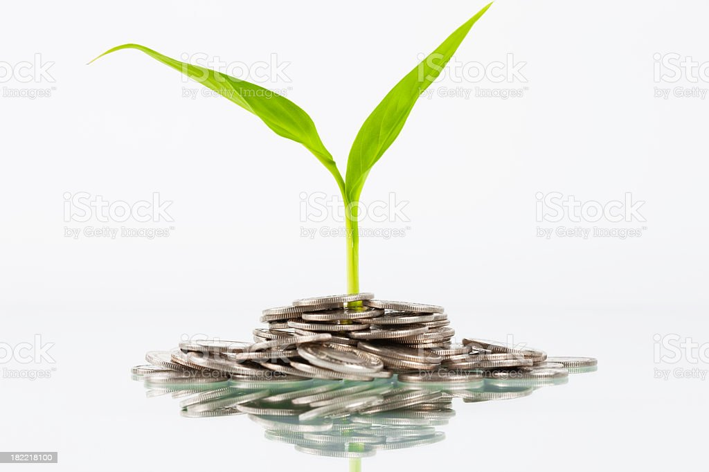 Multiple coins with a plant nearby stock photo