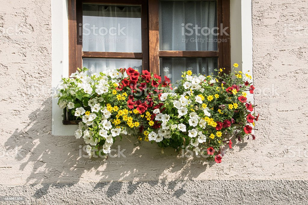 multiple colored flowers on a window stock photo