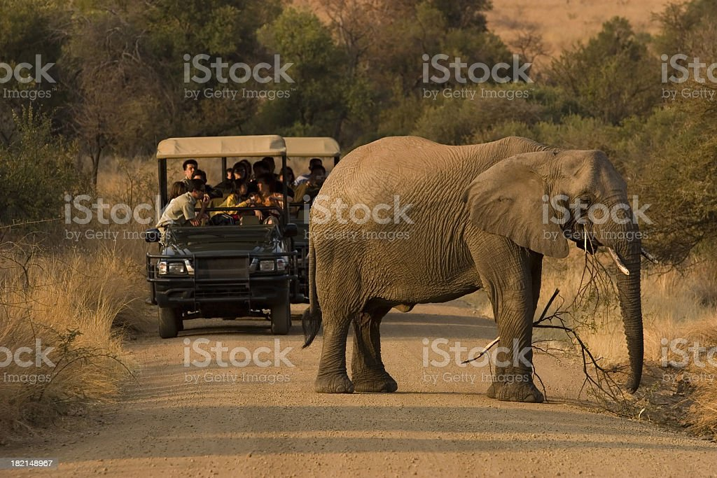Multiple people on a safari viewing an elephant stock photo