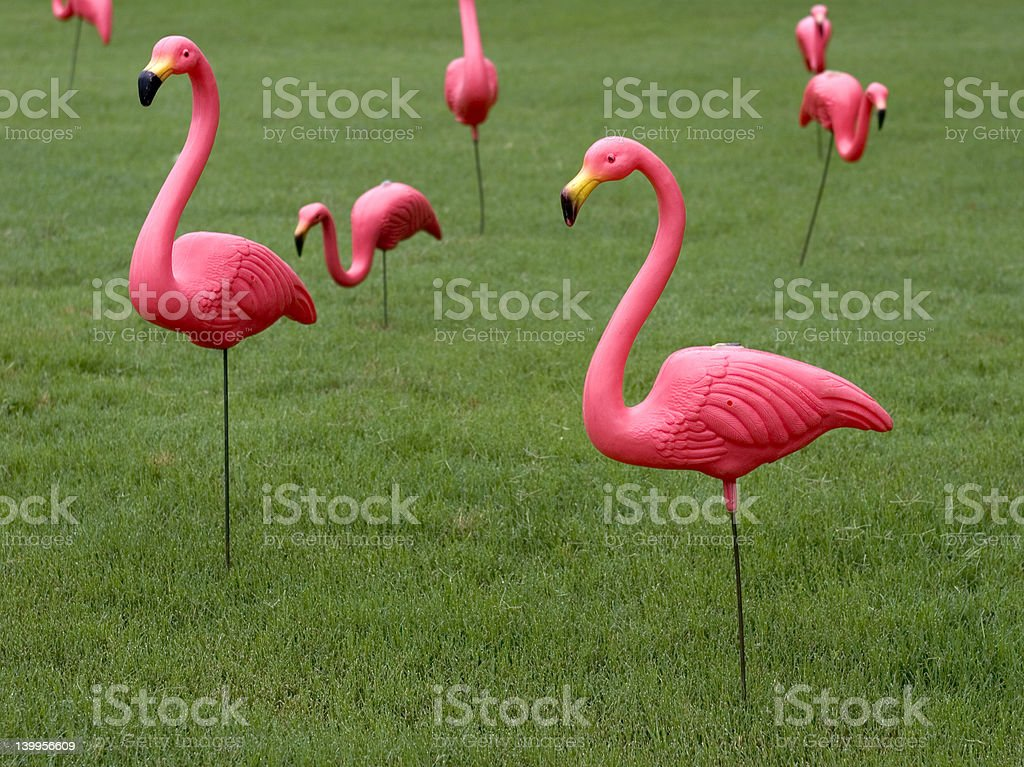 Multiple Pink Plastic Flamingos on Lawn stock photo