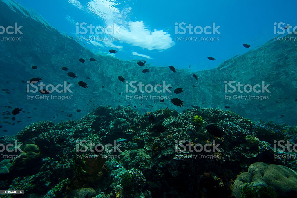 Multiple species of fish on a tropical coral reef stock photo