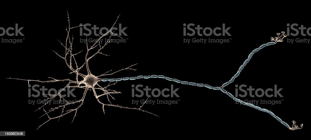 Multipolar Neuron stock photo