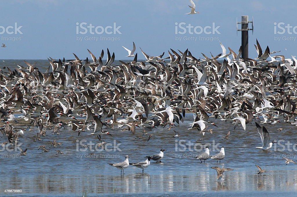 Multitude of Birds - Louisiana stock photo