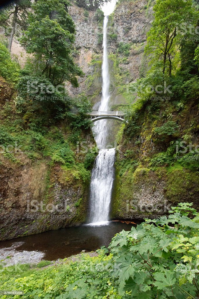 611' Multnomah Falls, Oregon, Lush Green Forest, Extreme Wide Angle stock photo