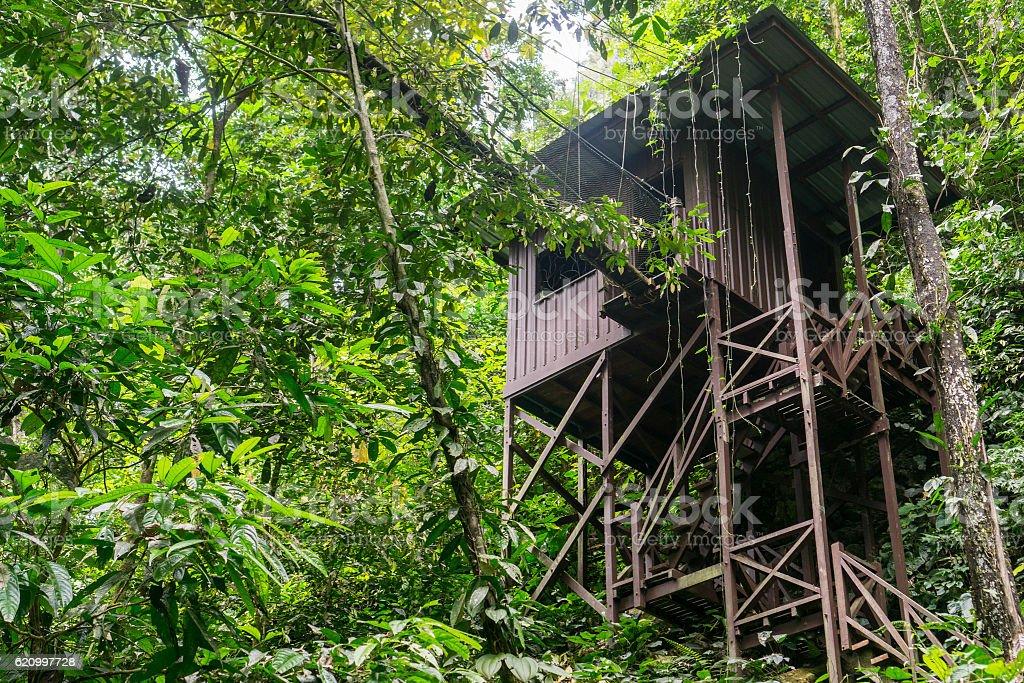 Mulu (Sarawak), Borneo stock photo