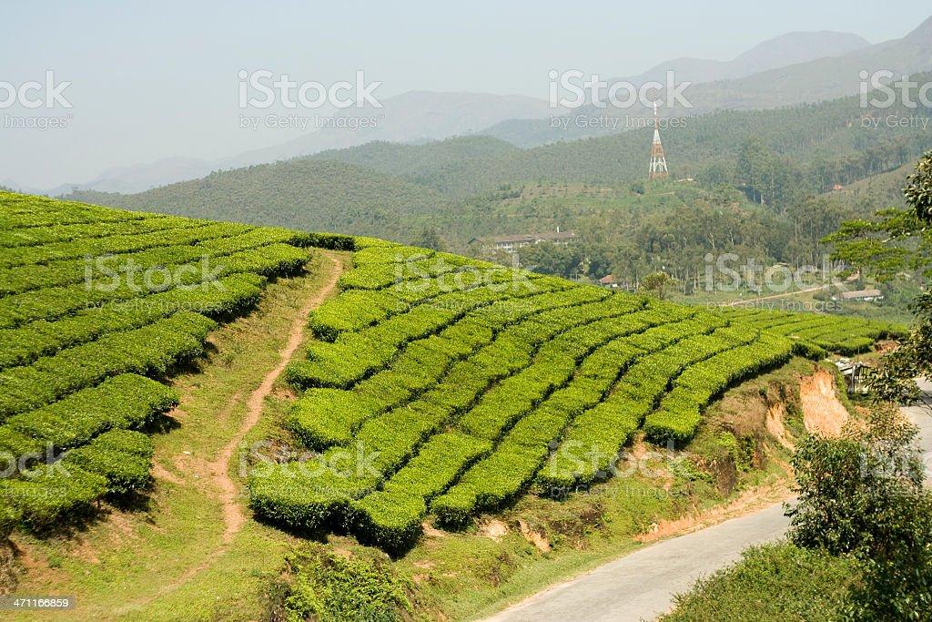 Munnar, Kerala royalty-free stock photo