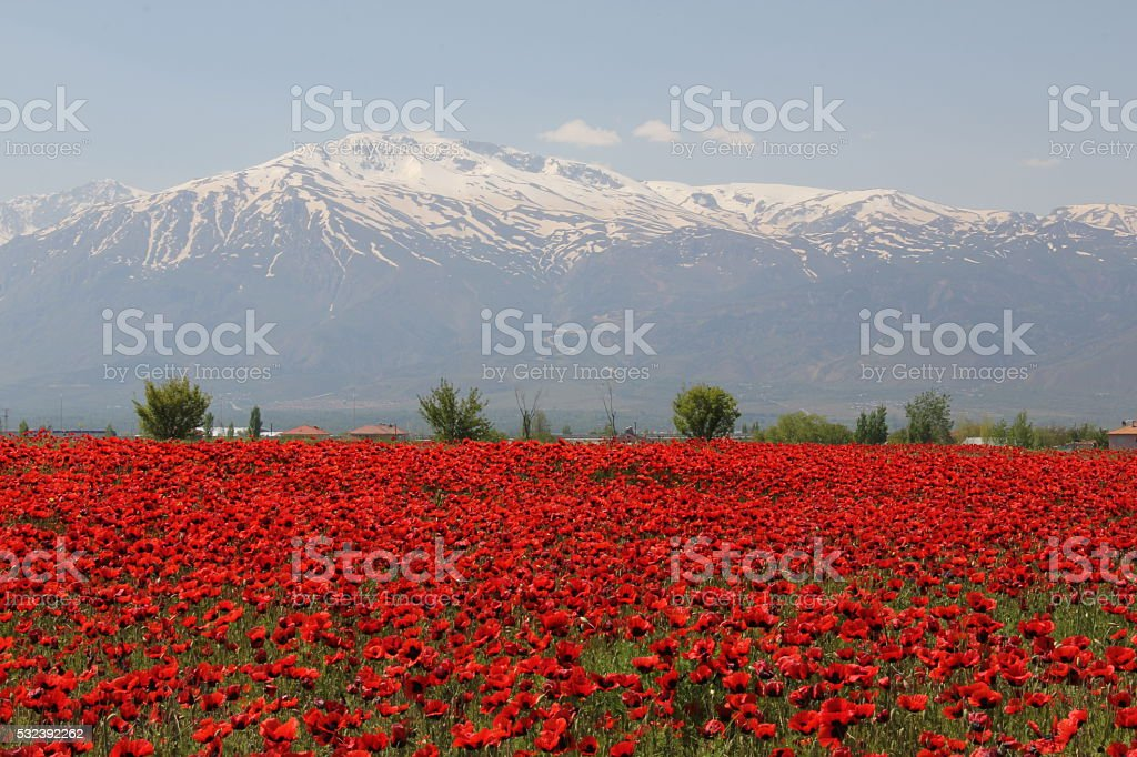 munzur mountains and flowers stock photo