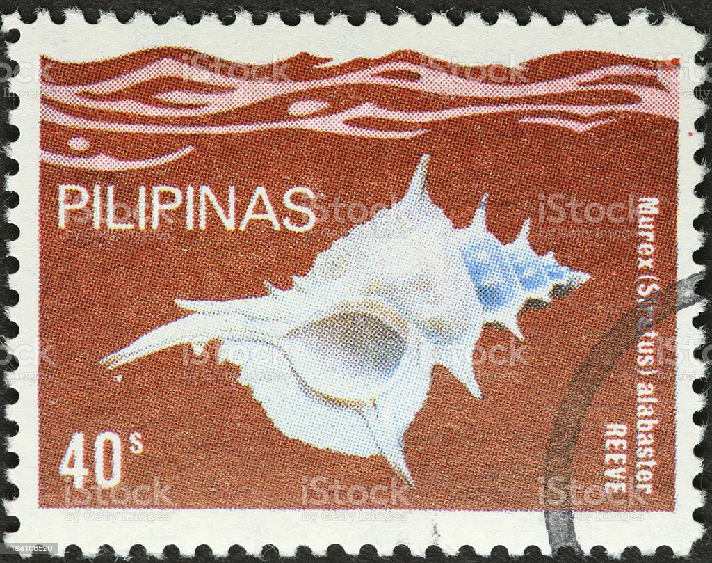 murex alabaster white sea shell on a Philippines stamp stock photo