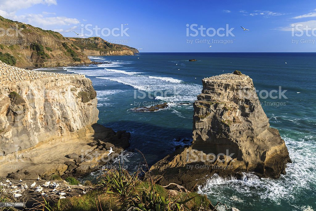 Muriwai Beach, Auckland, New Zealand royalty-free stock photo