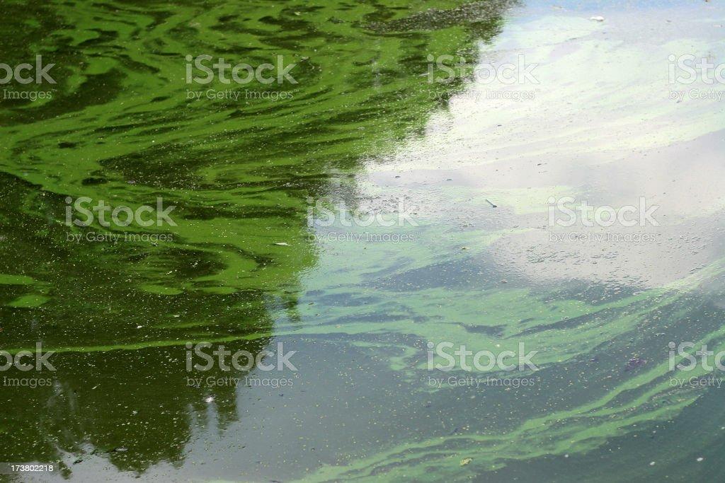 murky algae water royalty-free stock photo