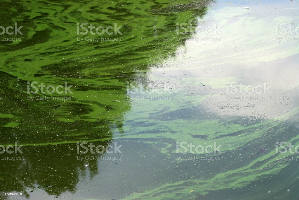 murky algae water stock photo
