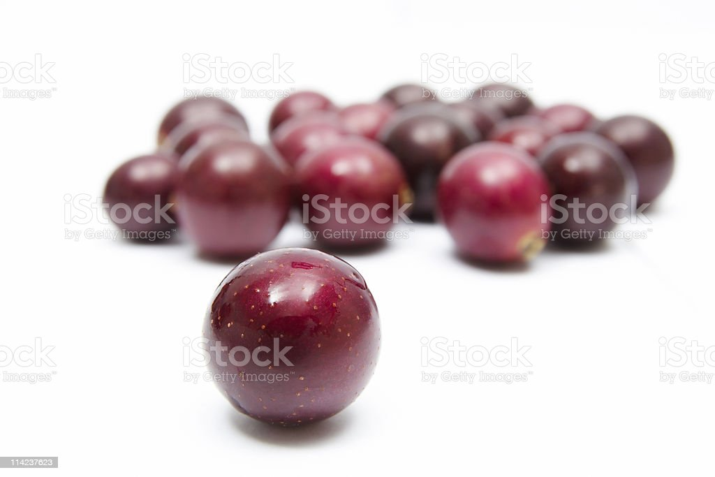 Muscadines on white stock photo