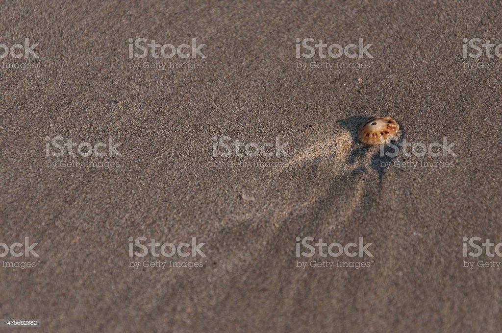 Muschel im Sand royalty-free stock photo