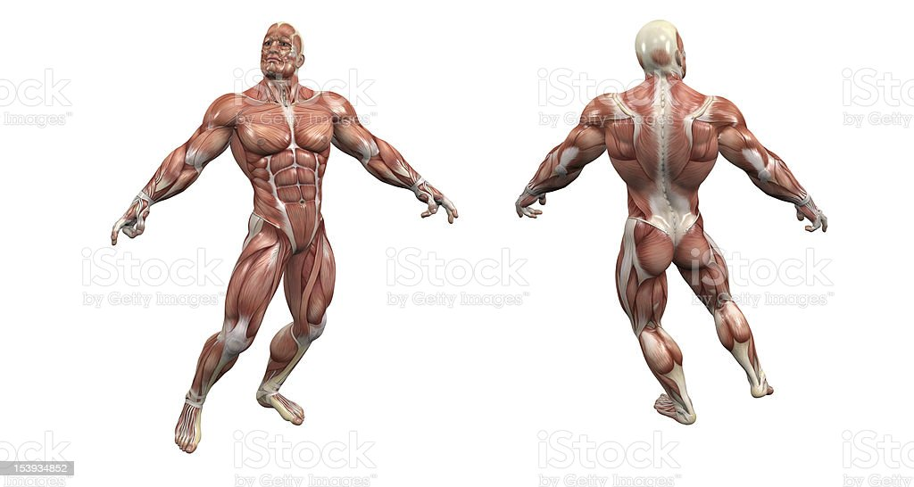 Muscular man foto de stock libre de derechos