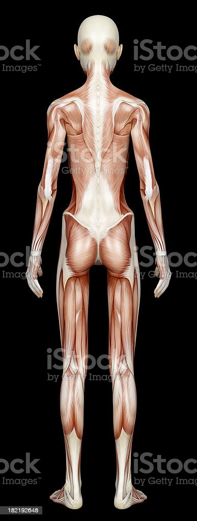 Muscles of a emaciated woman, for study stock photo