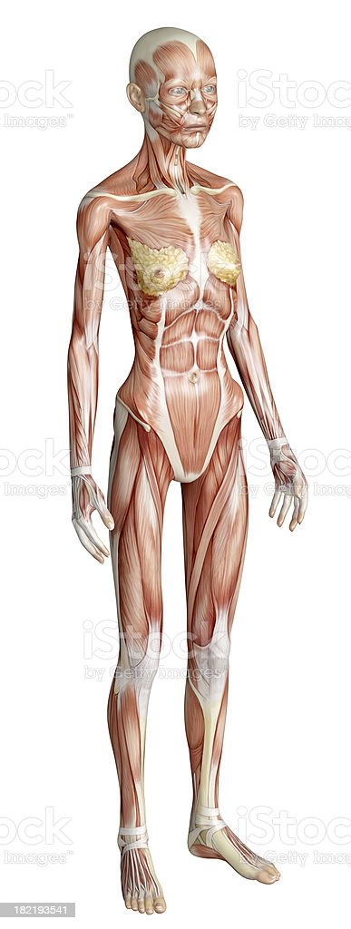 muscles of a emaciated woman for study stock photo 182193541 | istock, Muscles