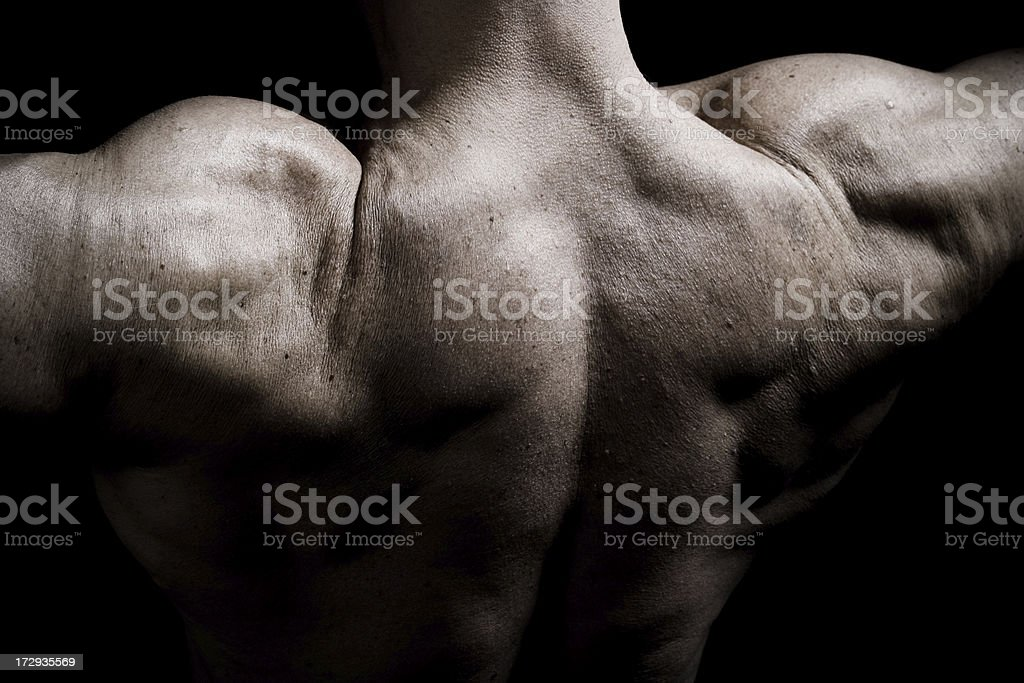Muscular Back of a Body Builder royalty-free stock photo