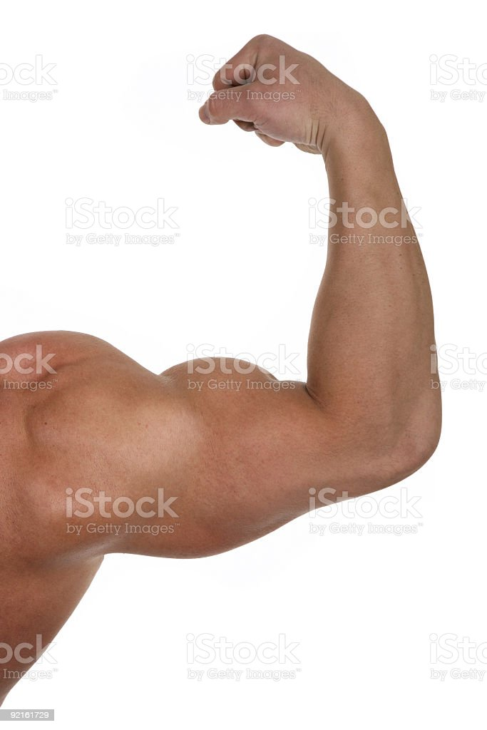 Muscular biceps isolated on white royalty-free stock photo
