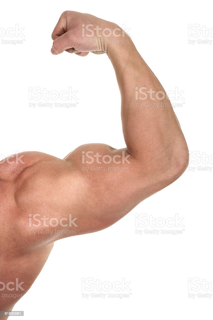 Muscular biceps royalty-free stock photo