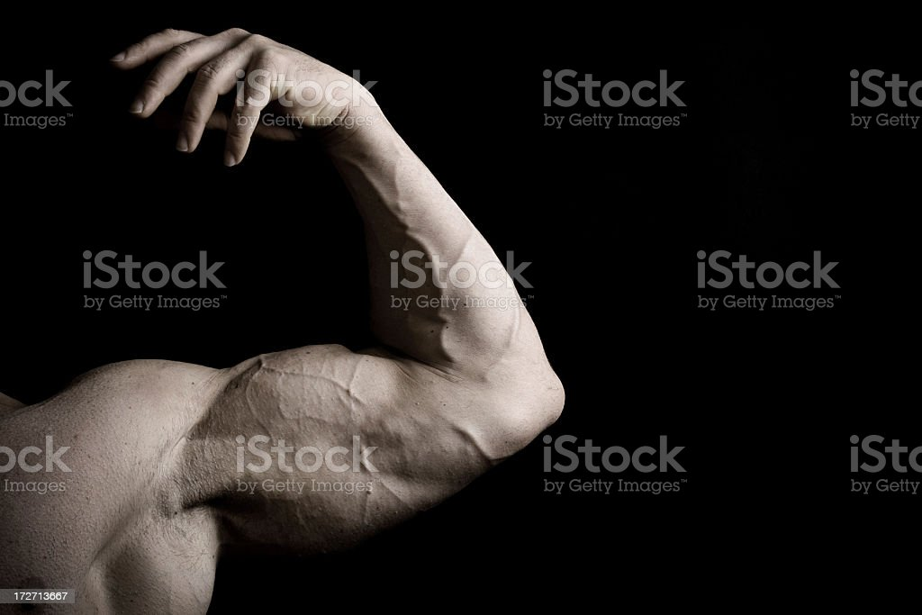 Muscular Male Bicep of a Bodybuilder stock photo