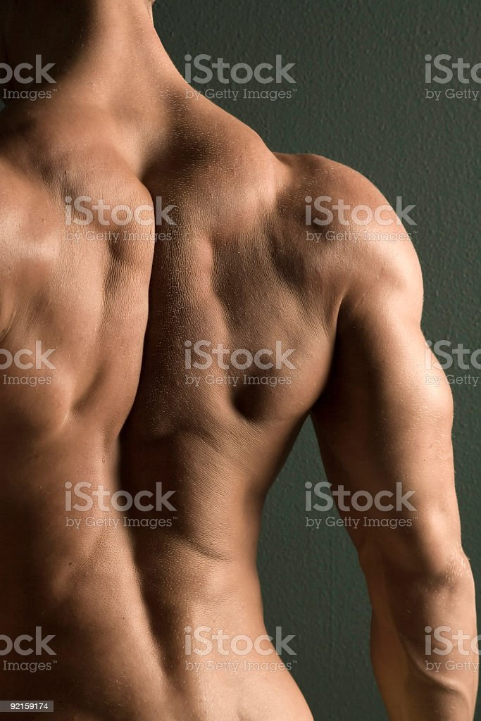 Muscular male body builder back royalty-free stock photo