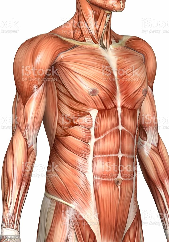 Muscular torso of a man stock photo