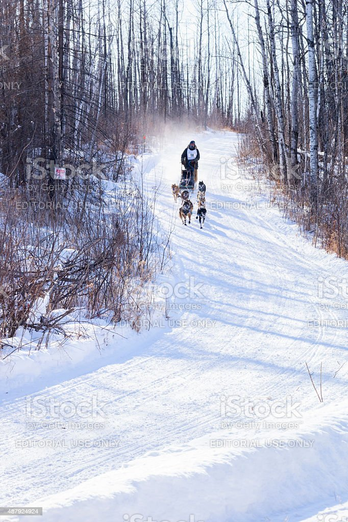 Musher races down a snowy hill in Ely, MN stock photo