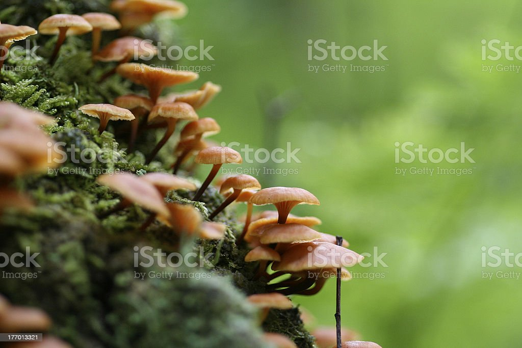 Mushorroms stock photo
