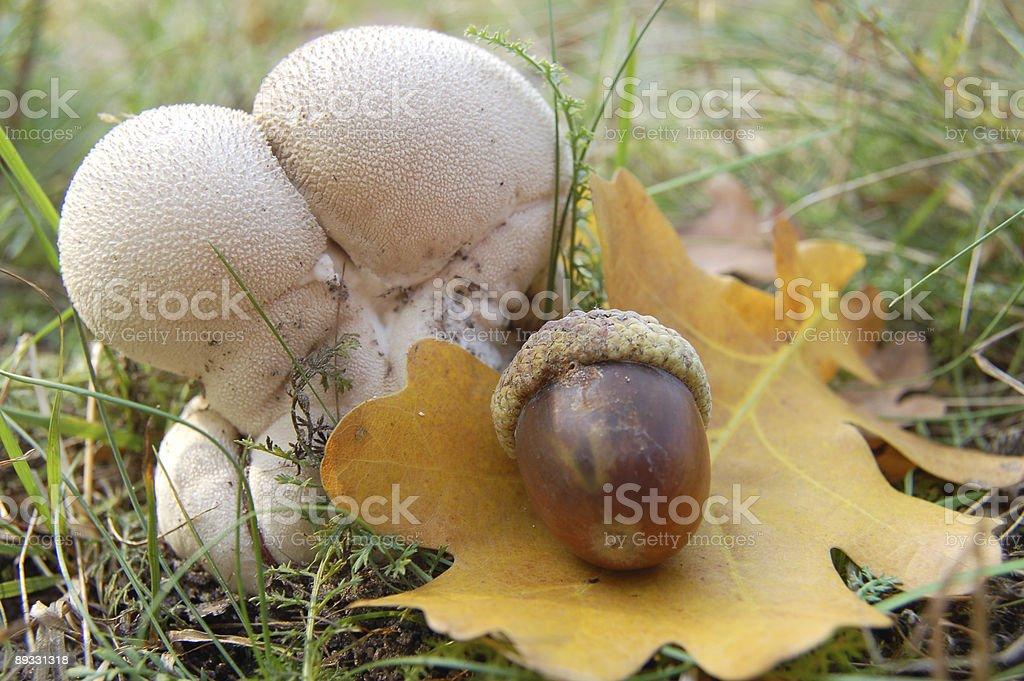 Mushroom and acorn royalty-free stock photo