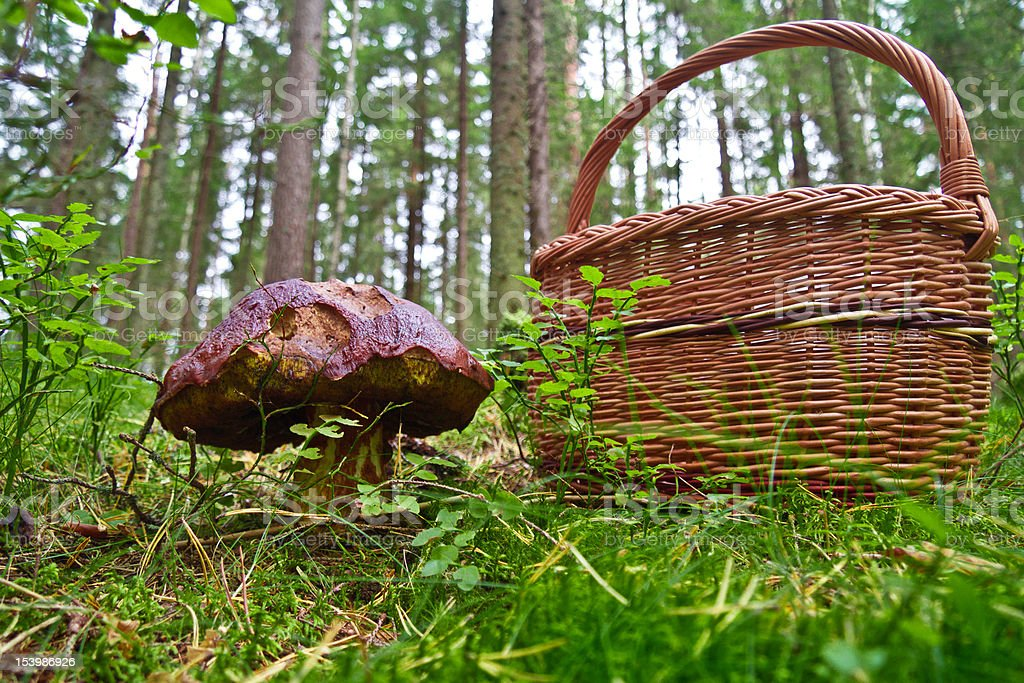 mushroom and basket royalty-free stock photo