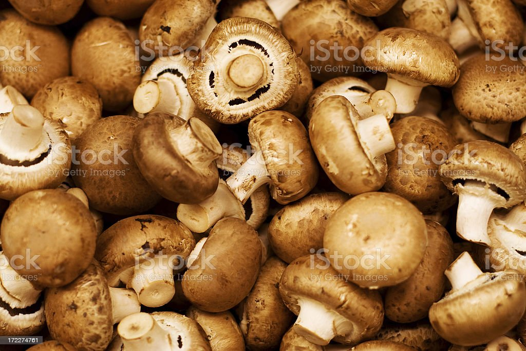Mushroom Backdrop stock photo