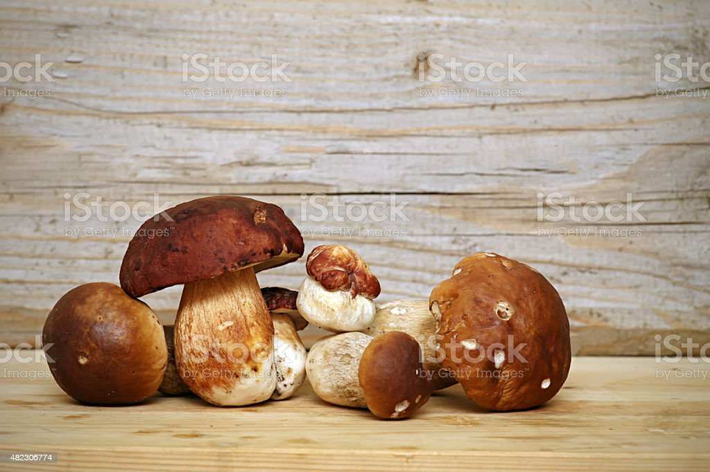 Mushroom Boletus over Wooden Background. Autumn Cep Mushrooms picking stock photo