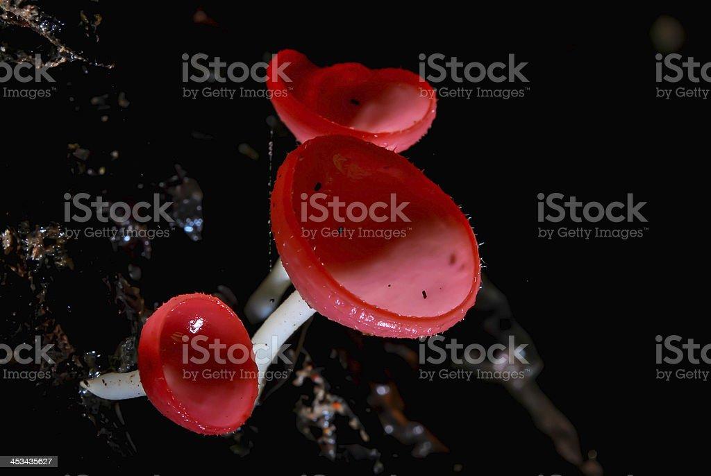 mushroom champange stock photo